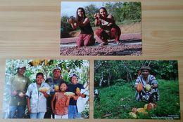 PERU COCOA POSTCARDS - Cultivation