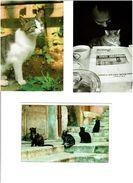 CHATS /  Lot De 62 Cartes Postales Modernes Neuves - Cartes Postales