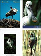 OISEAUX /  Lot De 90 Cartes Postales Modernes Neuves - Postcards