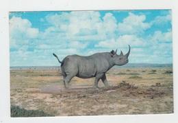 RHINOCEROS D'AFRIQUE - Rhinocéros