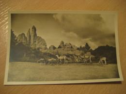 HAMBURG Camel Africa Steppe Hagenbecks Tierpark Stellingen Zoo Post Card Germany - Stellingen