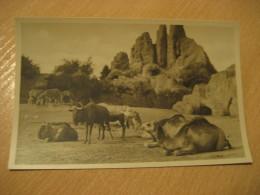 HAMBURG Zebra Dromedary Camel Wildebeest Gnu Hagenbecks Tierpark Stellingen Zoo Post Card Germany - Stellingen