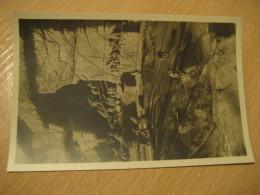 HAMBURG Rhesus-Affen Monkey Hagenbecks Tierpark Stellingen Zoo Post Card Germany - Stellingen