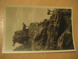 HAMBURG Hochgebirge Mahnenschafe Goat Hagenbecks Tierpark Stellingen Zoo Post Card Germany - Stellingen