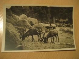 HAMBURG Nordland Panorama Renntiere Reindeer Hagenbecks Tierpark Stellingen Zoo Post Card Germany - Stellingen