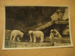 HAMBURG Nordland Panorama Eisbaren White Bear Hagenbecks Tierpark Stellingen Zoo Post Card Germany - Stellingen