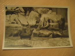 HAMBURG Walrosse Seelowen Seebaren Seal Walrus Hagenbecks Tierpark Stellingen Zoo Post Card Germany - Stellingen
