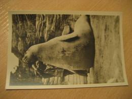 HAMBURG See Elefant Elephant Seal Hagenbecks Tierpark Stellingen Zoo Post Card Germany - Stellingen