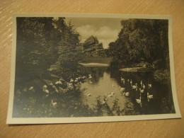HAMBURG Flamingos Japan Hagenbecks Tierpark Stellingen Zoo Post Card Germany - Stellingen