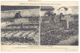 Cpa Juan Les Pins - Effets Du Sulfate D'Ammoniaque Sur Fleurs ... Expérience Organisée Sur Les Pensées  ( 06 ) - France