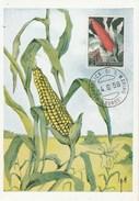 Saint Marin Carte Maximum 1958  Yvert  450 - Maïs - Thème Agriculture - Illustration 2 - De Borgo - Covers & Documents