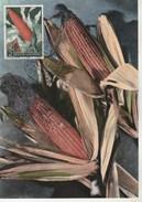 Saint Marin Carte Maximum 1958  Yvert  450 - Maïs - Thème Agriculture - Illustration 3 - Covers & Documents