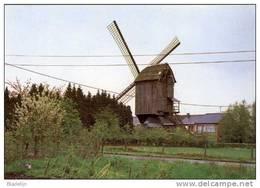 GEEL (Antw.) - Molen/moulin - Historische Opname Van De Gansakkermolen Met Wieken (overgebracht Naar Sint-Amands) - Geel