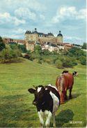Vaches Animaux Vache Boeufs Veau Paturages Ferme Paysan Hautefort Le Château - Vaches