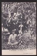 CPA   DAHOMEY. Un Cocaoyer. - Dahomey