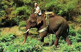 Thailandia (North Thailand) Elefante, The Trained Elephant Going To Work In The Teak-Wood Forest In Chiang Mai - Tailandia