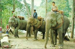Thailandia (North Thailand) Elefanti, Trained Elephants Going To Work In The Teak-Wood Forest In Chiengmai - Tailandia