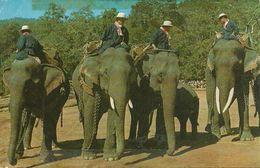 Thailandia (Thailand) Elefanti, Elephants Preparing For A Parade - Tailandia