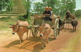 Thailandia (North Thailand) Buoi, Carts Drawn By Both Buffalos And Cows, It's Thai Ancient Transport That Still Existing - Tailandia