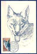 1958 , IFNI , ED. 139 - DIA DEL SELLO , FAUNA AFRICANA , CANIS AUREUS,  MAT. DE SIDI IFNI - Ifni