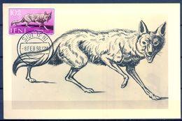 1958 , IFNI , ED. 138 - DIA DEL SELLO , FAUNA AFRICANA , CANIS AUREUS,  MAT. DE SIDI IFNI - Ifni