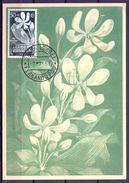 1957 , GUINEA ESPAÑOLA , ED. 315 - PRO INDÍGENAS , FLORA , CRINUM GEGANTEUM , MAT. SANTA ISABEL / FERNANDO POO - Guinea Española