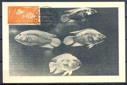 1958 , SAHARA ESPAÑOL , ED. 111 - DIA DEL SELLO , PECES , SARGO , MAT. VILLA CISNEROS / COLONIA DE RIO DE ORO - Sahara Español