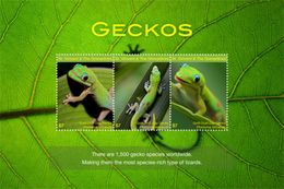Saint Vincent & The Grenadines Animal Geckos - Reptiles & Amphibians