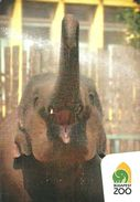 ELEPHANT * ANIMAL * CALENDAR * Budapest Zoo 2018 01 * Hungary - Calendarios