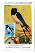 OISEAU / HIRONDELLE = BULGARIE 1965 N° 1318  = CARTE MAXIMUM INSTITUT ROYAL De BELGIQUE - Swallows