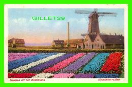 BOLLENLAND, NETHERLAND - HYACINTENVELDEN - GROETEN UIT HET BOLLENLAND - TRAVEL - J. H. SCHAEFERS - - Pays-Bas