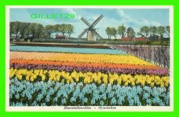 BOLLENLAND, NETHERLAND - HYACINTEN -  WEENENK & SNEL - - Pays-Bas