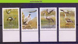 Ncf091 FAUNA VOGELS KRAANVOGEL GIER CRANES VULTURES BIRDS VÖGEL AVES OISEAUX TRANSKEI 1991 PF/MNH - W.W.F.
