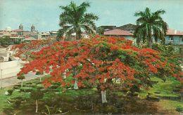 Republica De Panama, Panama, Plaza De Francia, Francia Square With Acacia Trees - Panama