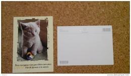 Carte Postale CHAT CHATON COURAGE  Non Circulé - Chats