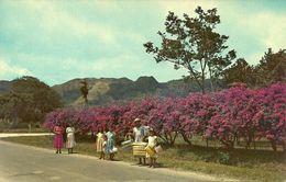 Republica De Panama, El Valle De Anton, Prov. De Coclé, The Sleeping Indian, A Symbol In The Chain Of Mountains - Panama