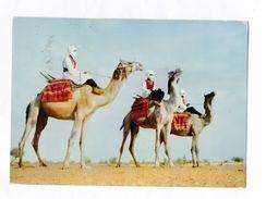 Sahara Español  Meharistas Carte Verso : Imprimé Avec Publicité AMORA N°III  état Moyen - Western Sahara