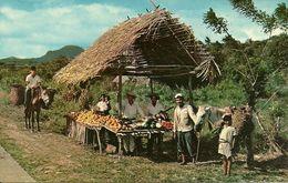 Republica De Panama, Un Ranchito Tipico A Lo Argo De La Carretera Inter-Americana, A Typical Native Fruitstand - Panama