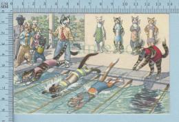 Chats, Cat - Humanisés,  Olympique, Natation - Postcard, Carte Postale - Animaux Habillés