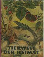 Sammelbilderalbum Tierwelt Der Heimat Komplett Mit Losen Bildern #09 - Sammelbilderalben & Katalogue