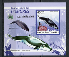 2009 -  ISOLE COMORES - Mi. Nr.  2434 - NH -  (UP.70.30) - Isole Comore (1975-...)