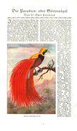 Die Paradies-oder Göttervögel (von Dr.Emil Carthaus.     / Druck, Entnommen Aus Zeitschrift /1924 - Books, Magazines, Comics