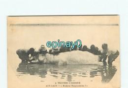 GABON - OGOOUE - Hippopotame - Gabón