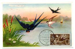 OISEAU / HIRONDELLE =  IFNI 1958  N° 118 = CARTE MAXIMUM - Swallows
