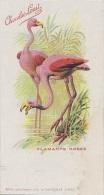 Oiseaux - Illustration - Publicité Chocolat Louit - Précurseur - Flamants Roses - Vögel
