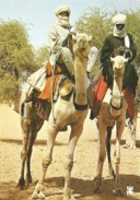 BURKINA FASO - Habituelle Rencontre En Pays Liptako - DROMADAIRE - Burkina Faso
