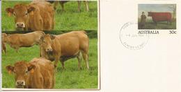Durham Bull (entier Postal Australien), Année 1984 - Cows
