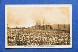 Cartolina Sauze D'Oulx - Albergo Miravalle E Narcisi - 1930 Ca. - Unclassified