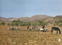BURKINA FASO - Près De DORI, Scène Pastorale Autour D'un Point D'eau - ANE - Burkina Faso