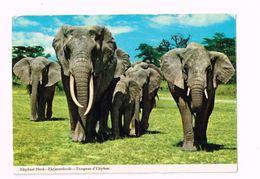 Troupeau D'éléphants. - Elefantes